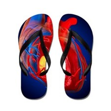 Structure of a human heart, artwork Flip Flops