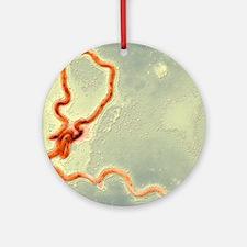 Syphilis bacterium, TEM Round Ornament