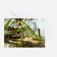 Insect larvae Greeting Card