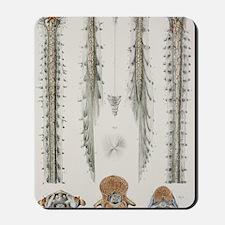 Spinal cord anatomy, 1844 artwork Mousepad