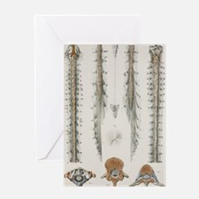Spinal cord anatomy, 1844 artwork Greeting Card