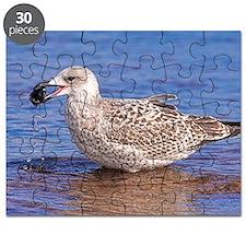 Immature herring gull Puzzle