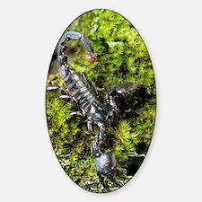 Imperial scorpion Sticker (Oval)