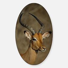 Impala Decal