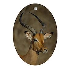 Impala Oval Ornament