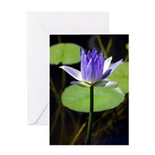 Water lily (Nymphaea sp.) Greeting Card