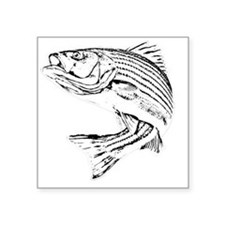 "Striped Bass Square Sticker 3"" x 3"""