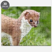 Stoat Puzzle