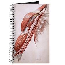 Arm nerves Journal