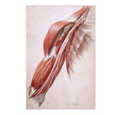 Arm nerves Postcards (Package of 8)