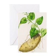 Yam (Dioscorea villosa) Greeting Card