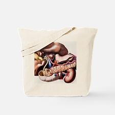 Abdominal organs Tote Bag