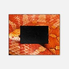 Corn Snake  Picture Frame
