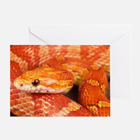 Corn Snake  Greeting Card
