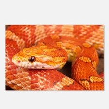 Corn Snake  Postcards (Package of 8)