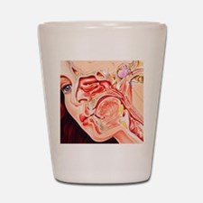 Artwork of ear, nose Shot Glass