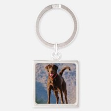 Lovable Chocolate Lab Square Keychain