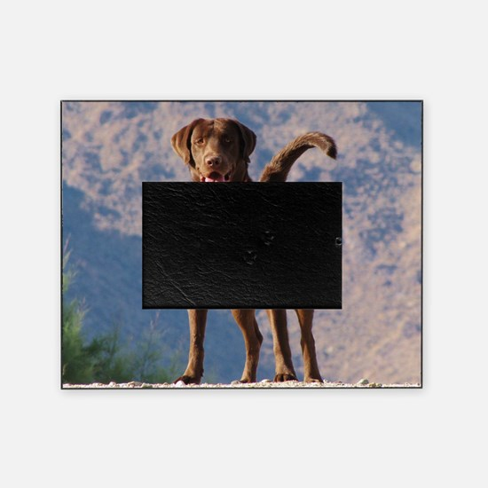 Lovable Chocolate Lab Picture Frame