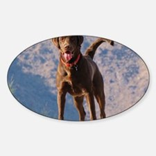 Lovable Chocolate Lab Sticker (Oval)