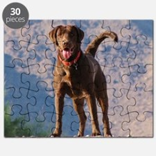 Lovable Chocolate Lab Puzzle