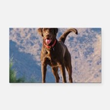 Lovable Chocolate Lab Rectangle Car Magnet