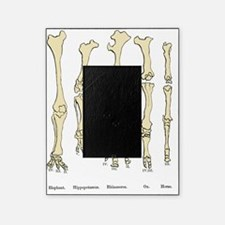 Comparison of animal feet, historica Picture Frame