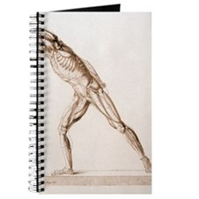 Body musculature Journal