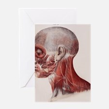 Facial nerves Greeting Card