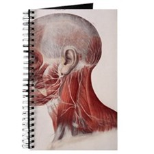 Facial nerves Journal