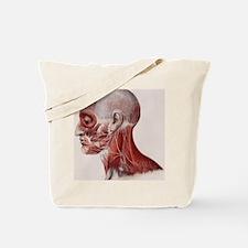Facial nerves Tote Bag