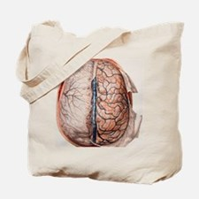 Brain meninges Tote Bag