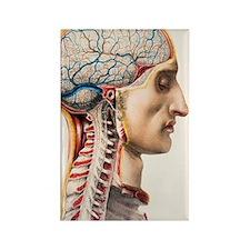 Brain blood vessels Rectangle Magnet