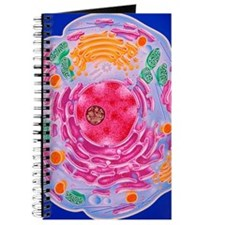 Cell structure Journal