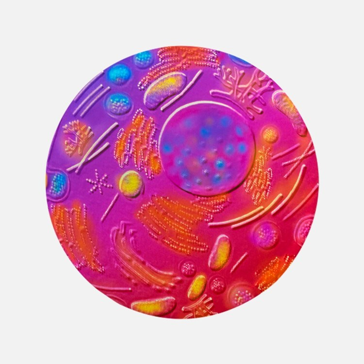 """Computer graphic of animal cell 3.5"""" Button"""