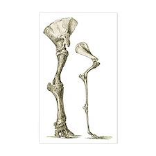 Elephant and camel leg bones,  Decal