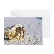 Juvenile land hermit crab Greeting Card