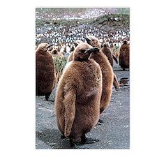 King penguin chicks Postcards (Package of 8)