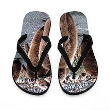 King penguin chicks Flip Flops