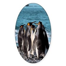 King penguins Decal
