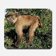 Juvenile chacma baboon Mousepad