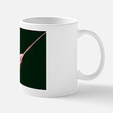 Krill, SEM Mug