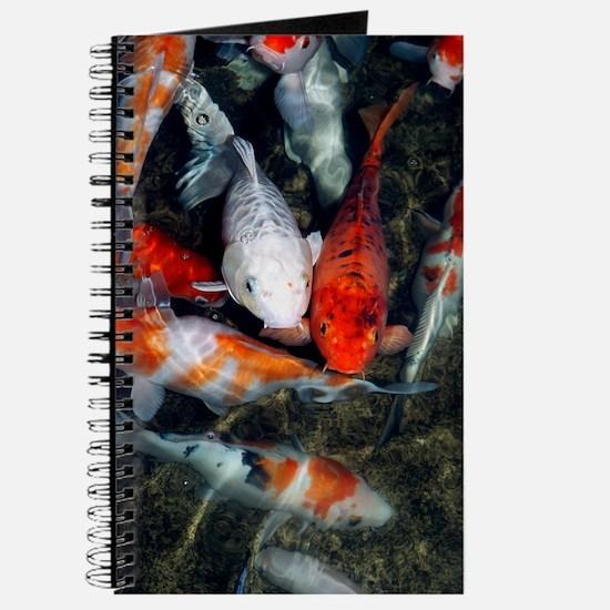 Koi carp in a pond Journal