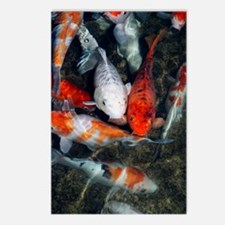 Koi carp in a pond Postcards (Package of 8)