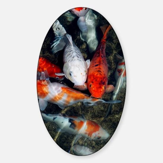 Koi carp in a pond Sticker (Oval)