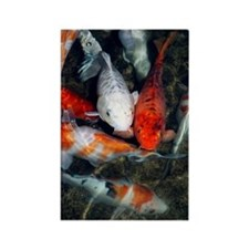 Koi carp in a pond Rectangle Magnet