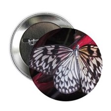 """White Butterfly 2.25"""" Button"""