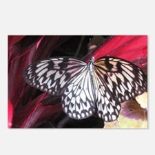 White Butterfly Postcards (Package of 8)