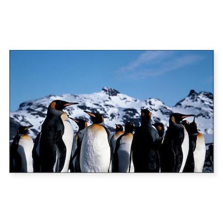 King penguins Sticker (Rectangle)