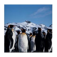 King penguins Tile Coaster