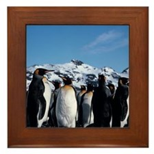 King penguins Framed Tile